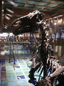 Les dinosaures au museum d'histoire naturelle