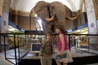 Musée de l'Afrique centrale, Tervuren