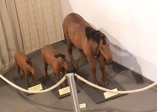 évolution du cheval (exposition à Treignes)