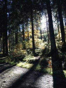 Vallée de la Hoëgne en automne
