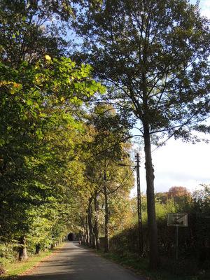 Promenade nature à Jambes
