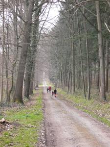 Promenade dans la forêt de Marche-les-Dames